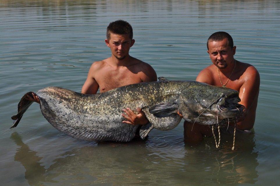 Rio Ebro LM Waller 201200034