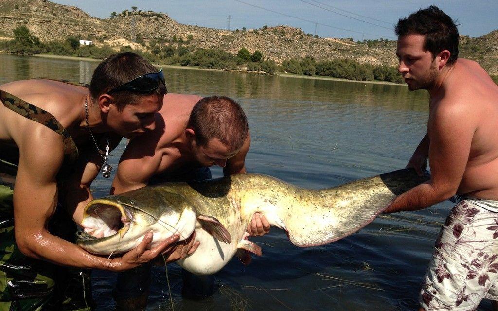 Rio Ebro LM Waller 201300087